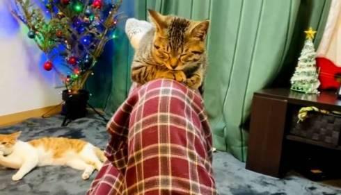猫 ジュノちゃん わざわざそこで寝る