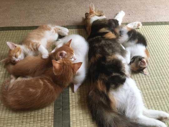猫だと自覚していない ねこ ソファ 座り方 堂々 王