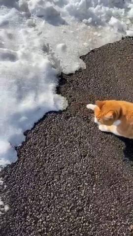 猫 雪にビビる ちゃちゃ様