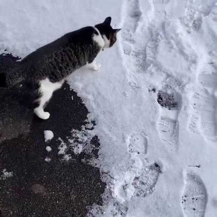猫 雪にビビる ちゃちゃ様 しゅうちゃん