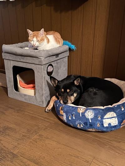 お米とネコちゃん