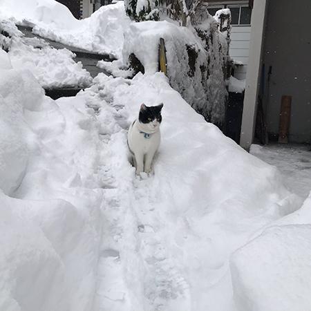 除雪された道とハチくん