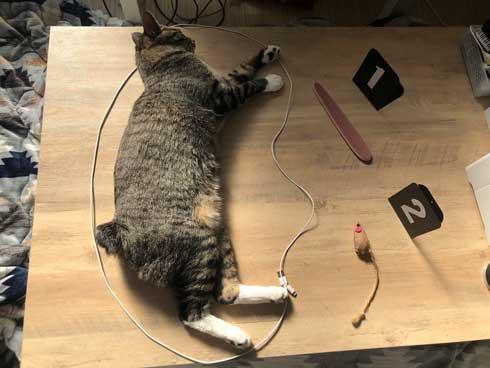 猫 ティッシュ イタズラ 悪事を働いても 責任能力なし 無罪 ねこまるすいさん
