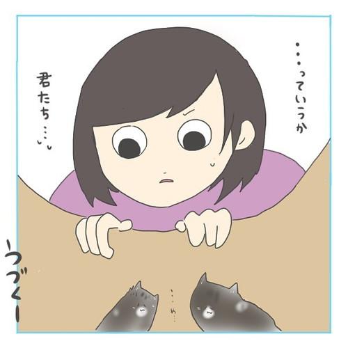 「猫にゃんを保護した話3」