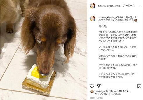 氷川きよし ココア 愛犬 腫瘍