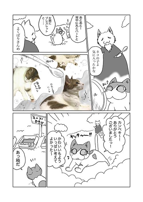 飼い猫の模様に関する考察3