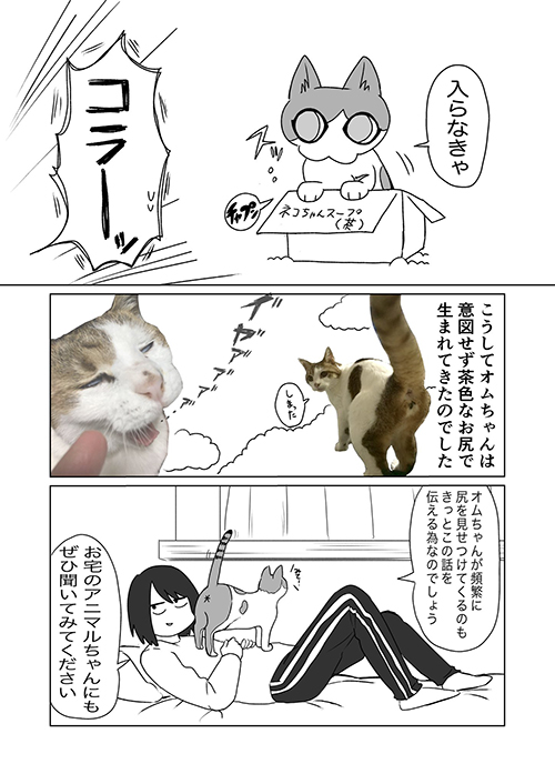 飼い猫の模様に関する考察4