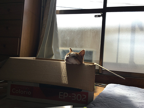 箱入り猫ちゃんあごのせ