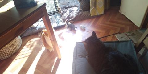 ぬいぐるみを運ぶ猫ちゃん