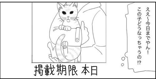 「愛猫2にゃうちゃんがうちの子になった時のこと1」
