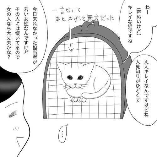 「愛猫2にゃうちゃんがうちの子になった時のこと2」