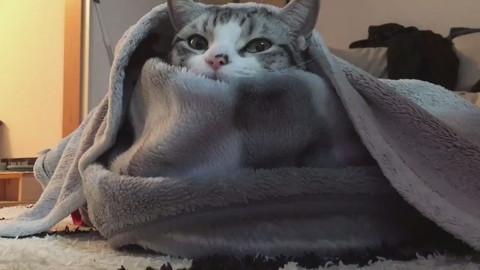 過保護に暖められているハクちゃん