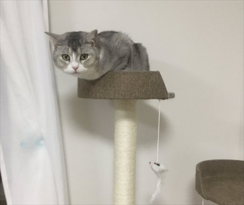 サイドワゴンに入る猫ちゃん