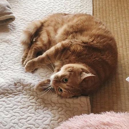 実写猫ちゃん寝ころび腕下げ