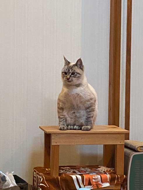 変な座り方の猫