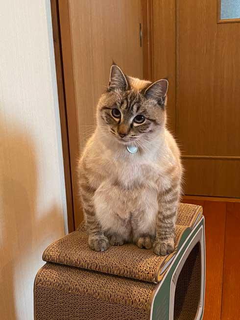 猫 座り方 おかしい かわいい しゃがむ ポーズ