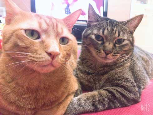 猫 ツーショット 写真 ポーズを決めてくれる リア充 カップル