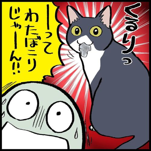 猫ちゃんとの駆け引き