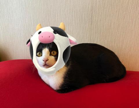 マッサージ機を楽しむ猫ちゃん