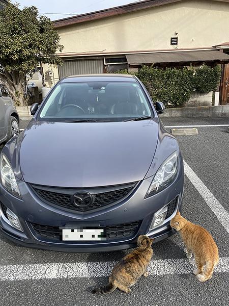 車を物色する猫ちゃん縦