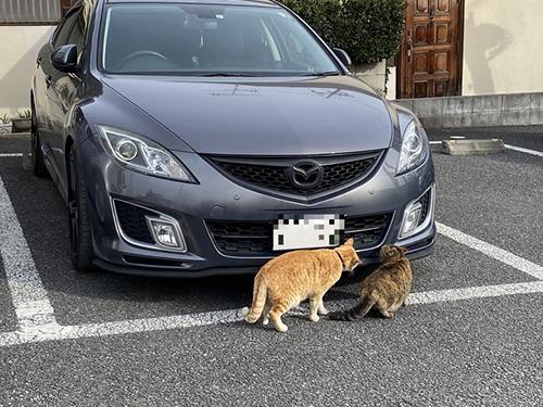 車を物色する猫ちゃん横