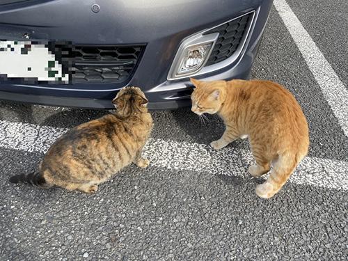 車を物色する猫ちゃんアップ