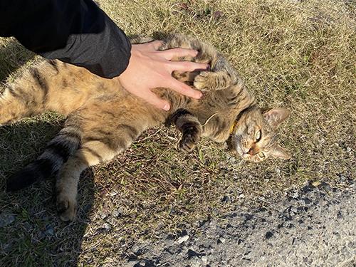 お腹をなでられる猫ちゃん