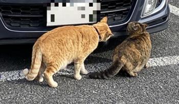 車を物色する猫ちゃん2匹の切り抜き