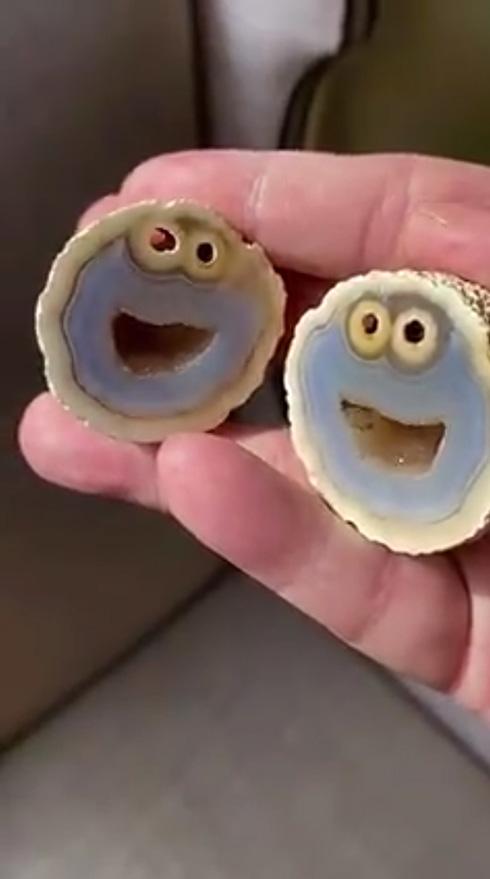 「ホントにおいらみたいだ」 ブラジルでどう見てもクッキーモンスターな石が発見される
