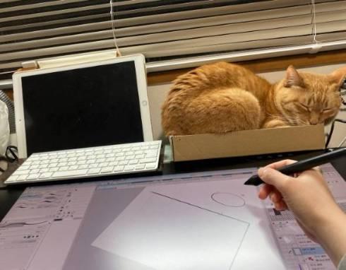 猫 箱からあふれる