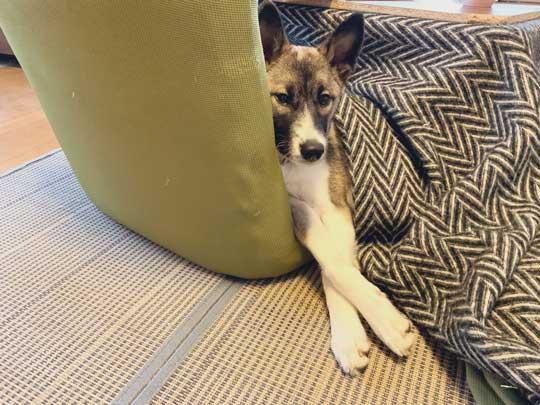 畳 顔 突っ込む 犬 掘る 保護犬 丁寧な暮らしをする餓鬼