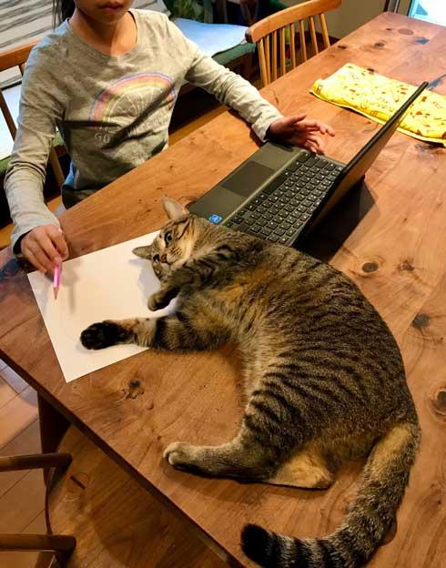 初めて オンライン授業 小学生 波乱の予感 猫 乱入