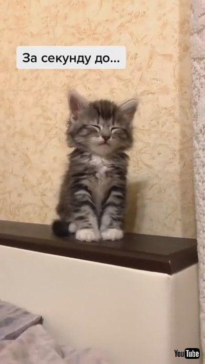 「Adorable Adopted Kitten Tries Not to Sleep || ViralHog」