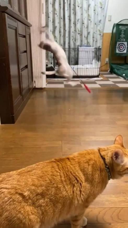 釣りをするネコ ふーちゃん
