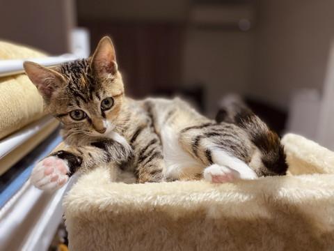 かわいい子ネコちゃんのいろんな姿