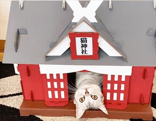 もふもふ猫神社