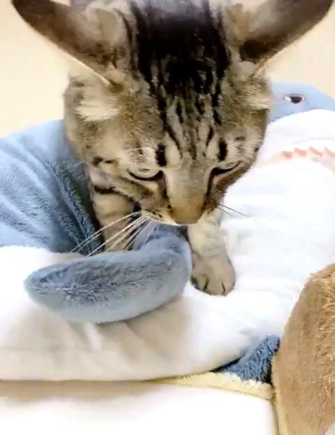 うどん捏ね職人の猫ちゃん