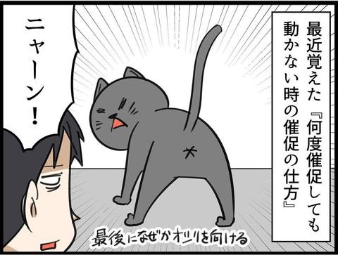 ご飯催促ネコちゃん
