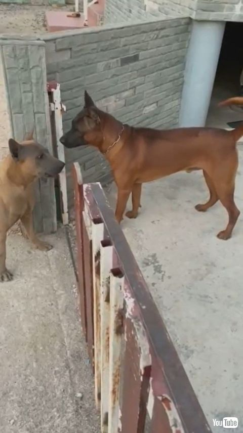 Fence Causes Friction