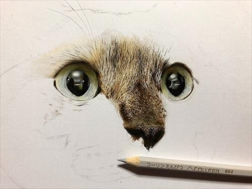 色鉛筆で描いた猫ちゃん