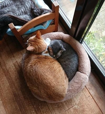 野良猫から家猫へのビフォーアフター