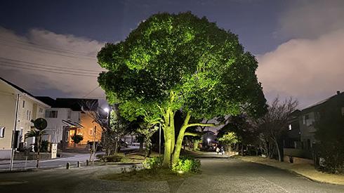 なぜ道の真ん中にっ?! ライトアップされた木が巨大ブロッコリーに見えてくる