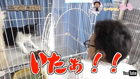 サンシャイン池崎 保護猫 風神雷神 寄付 猫の森 猫おじさん ふうちゃん らいちゃん ボランティア YouTube
