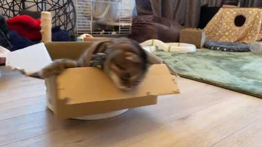 猫 ルンバ ロボット掃除機 乗りこなし 運転 ミス