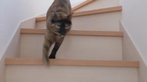 「買い物から帰宅したら猫がお出迎えしてくれます!」