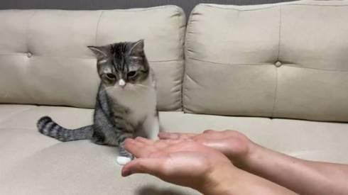 手品を見るネコ もちまる もち様 いいリアクション