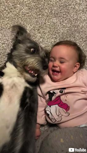 お互いにツボったワンコと赤ちゃん