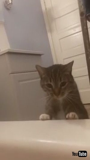 「Cat Drags Owner by Finger to Save Her From Drowning in Bathtub - 1172248」