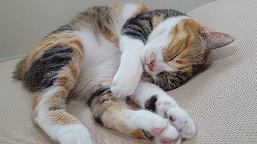 眠る菊ちゃん