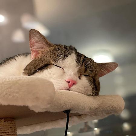 ぐっすり眠るライちゃん